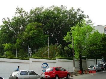 GNU - Sede Moinhos - Vista parcial das árvores a serem cortadas