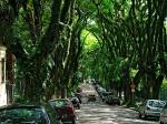 O Túnel Verde da Gonçalo de Carvalho foi preservado em 2006. A primeira via urbana tombada como Patrimônio Ambiental na América Latina.