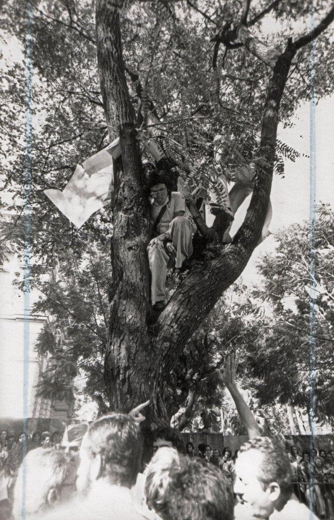 O estudante mineiro Carlos Dayrell salva uma árvore em 1975 - Arquivo AGAPAN