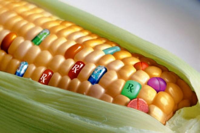 maize_g - hu